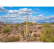 Lost Dutchman Spring Vista Photographic Print