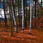 Three Birches in Autumn Leaves by Wayne King