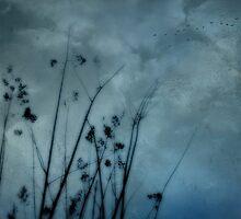 Seaside Storm by Scott Mitchell