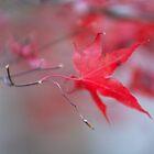 Color of fall by Carol Fan