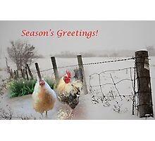 Season's Greetings from my garden! Photographic Print