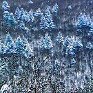 Snowy forest, Niseko, Japan by Tamara Travers