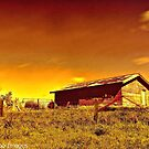 Till The Cows Come Home by wallarooimages