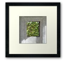 A view of trees Framed Print