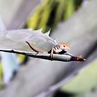 Little Brown Anole by Rosalie Scanlon