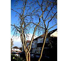 Shining Tree Photographic Print