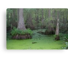 Misty Green Swamp Canvas Print