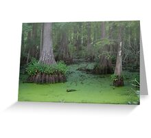 Misty Green Swamp Greeting Card