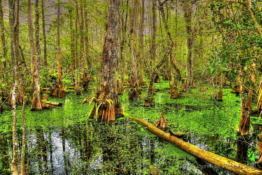 The Everglades in Florida by Jeremy Lavender Photography