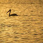 Pelican sunset by Brent Randall