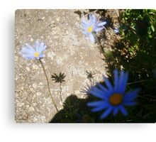 Shadow Play Canvas Print