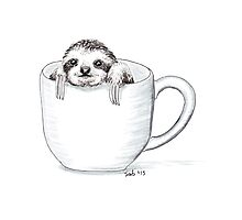Sloth in a Cup Photographic Print