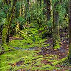 Enchanted Forest, Ronny Creek, Cradle Mountain, Tasmania #2 by Elaine Teague