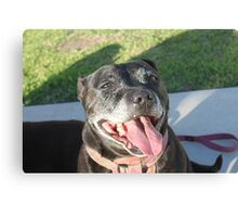 Our Dog Lilly Bet Canvas Print