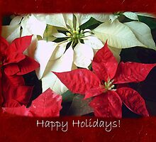 Mixed Color Poinsettias 2 Happy Holidays P5F5 by Christopher Johnson