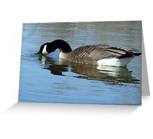 Canada Goose Feeding in the Water Greeting Card