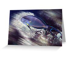 Surgeon fish, Red Sea Greeting Card