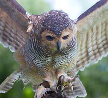 Watch Those Talons by byronbackyard