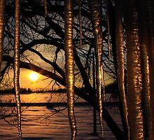 Icy Sunrise  by Shari Galiardi