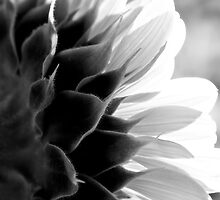 SunKissed in Black and White by Lee Craig