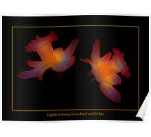 Daffodils in Glowing Colours Poster