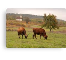 Jersey cows graze in the pasture fall. Canvas Print