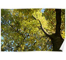 Autumnal Oak Tree - DigiPhotoArt  Poster