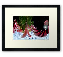 Planet Of King Protea. Framed Print