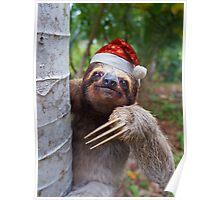 Christmas animal sloth wearing santa hat Poster