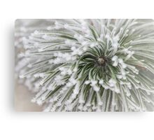 Frost on Pine Metal Print