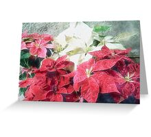 Mixed color Poinsettias 3 Watercolor Greeting Card