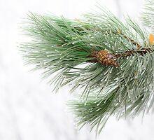 Icy pine by tamás klausz