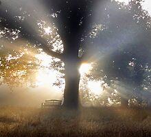 Lifting Fog No. 2 by kelvinLemur