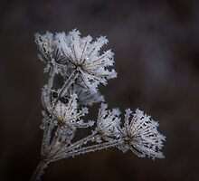 Frostwork by tamás klausz