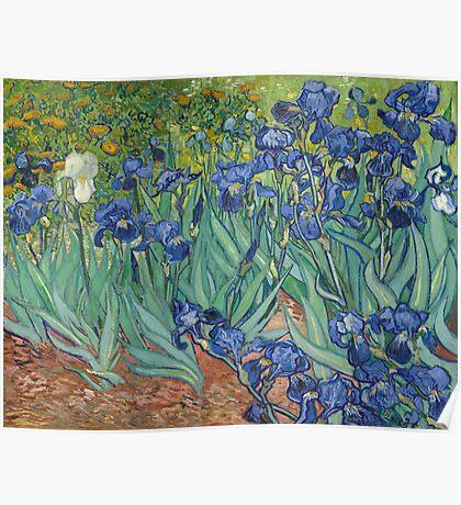 Vincent Van Gogh - Irises.  Van Gogh - Irises Impressionism Flowers 1889 Poster