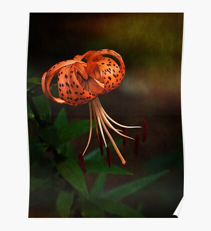 Turk's Cap Lily II Poster