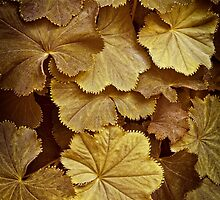Toasted Lady's Mantle Vertical by Lee Craig