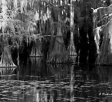 Dark Water - Caddo Lake near Uncertain, Texas by Betty Northcutt