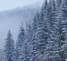Snow-covered fir forest by naturalis