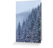 Snow-covered fir forest Greeting Card