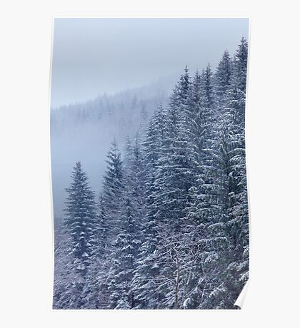 Snow-covered fir forest Poster