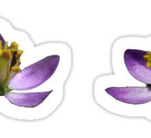 Purple Flowers Sticker