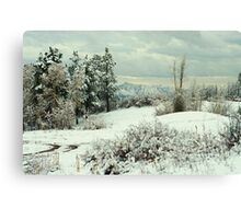 Colorado Winter Forest Canvas Print