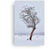 Lonely tree on snowy field Canvas Print