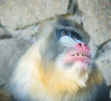 Magnificent Mandrill II by Ray Warren