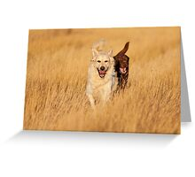 Dogs Running at Golden Hour Greeting Card