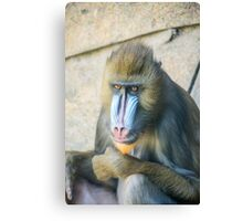 Magnificent Mandrill III Canvas Print