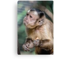 Cute Capuchin Monkey Canvas Print