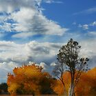 Southwest Fall by Sheryl Gerhard
