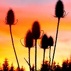 Teasle Sunset by ©The Creative  Minds